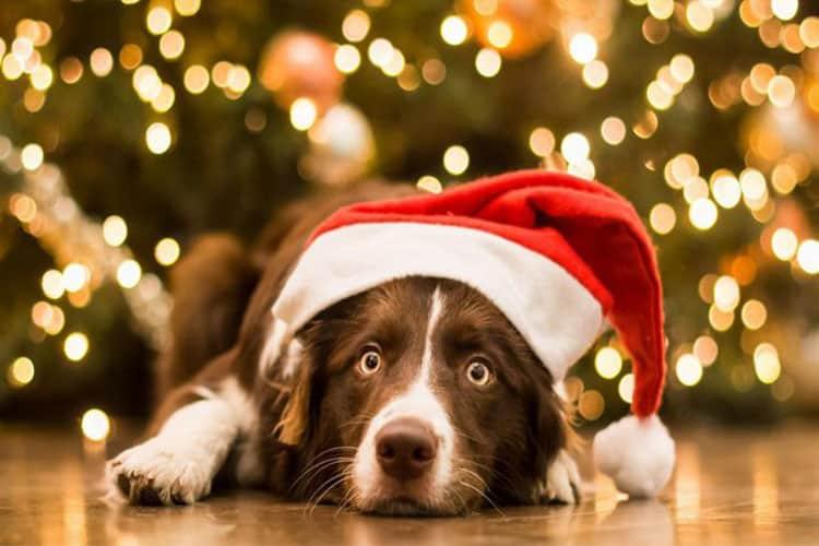 Встречаем год желтой собаки